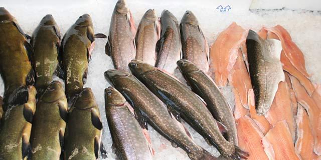 Frisch- und Räucherfisch